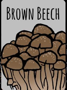 brownbeech