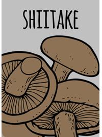 shiitake2