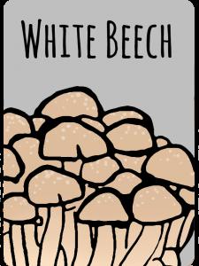 whitebeech
